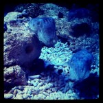 Cuttlefish at MBA